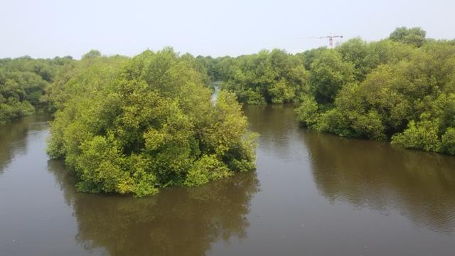 Tips dan Info Wisata di Wisata Alam Mangrove