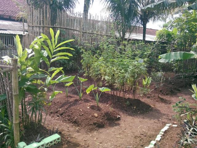 tanaman-obat