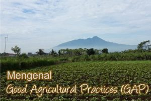 Mengenal Good Agricultural Practices (GAP)