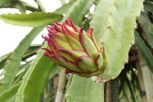 Belajar Agroindustri di Kebun Sunpride