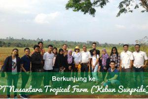 Berkunjung ke PT Nusantara Tropical Farm (Kebun Sunpride)