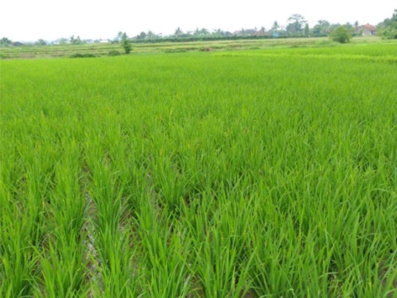 Pertanian Organik dan Penerapannya