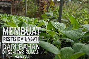Membuat Pestisida Nabati dari Bahan di Sekitar Rumah