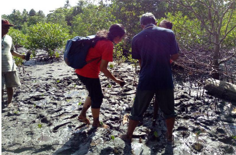 bibit-mangrove
