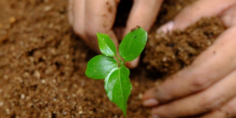 Pentingnya Konservasi dan Langkah Kecil untuk Kelestarian Alam