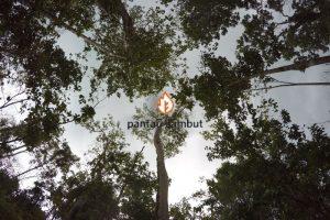 Restorasi Lahan Gambut, Kembalikan Ekosistem Alam Demi Masyarakat dan Lingkungan
