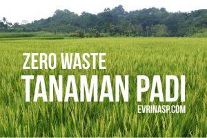 Zero Waste Pada Tanaman Padi