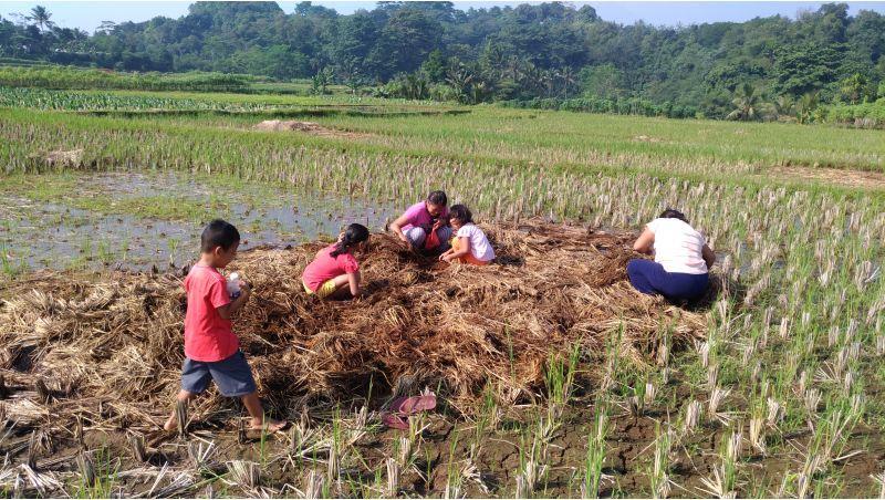 zero-waste-tanaman-padi -jamur