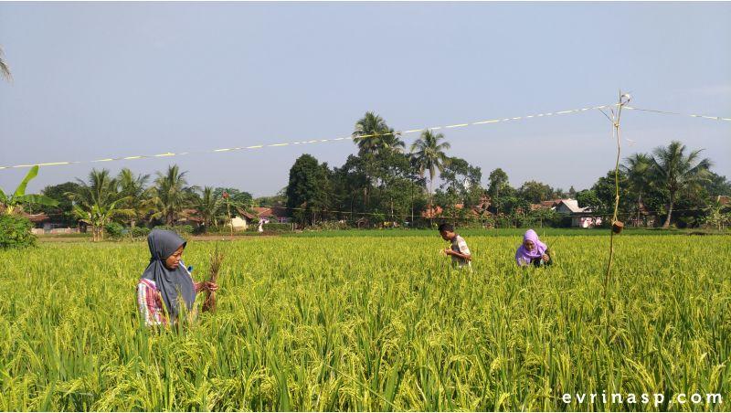 Pertanian Indonesia Apakah Bisa Maju Seperti Negara Lainnya