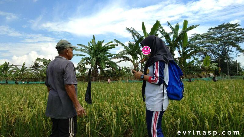anak-petani