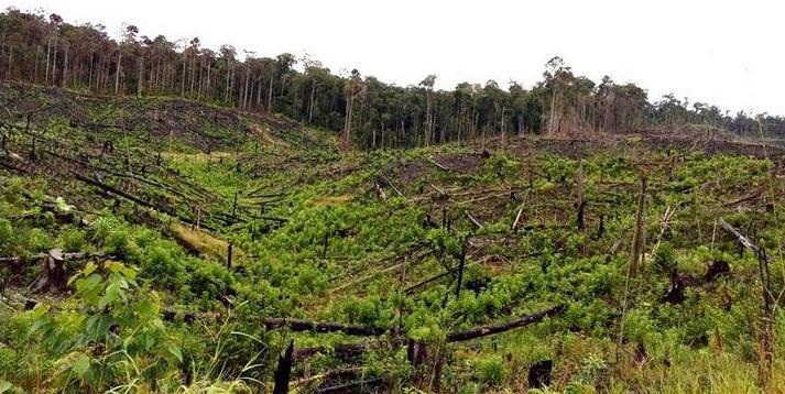 Hutan yang pernah terbakar di Kabupaten Berau, dokumentasi pribadi