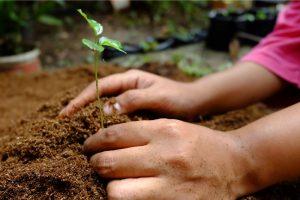 Hutan, Penyokong Kehidupan yang Wajib Kita Jaga