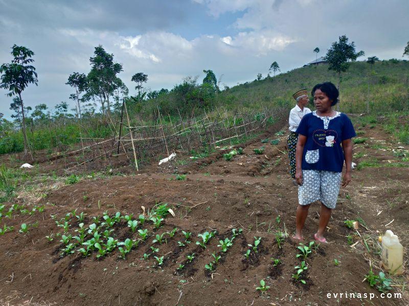 pertanian-terpadu-kurang-ar
