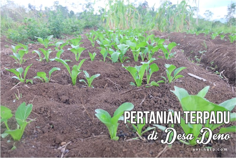 Conservacation Day 2: Pertanian Terpadu di Desa Deno