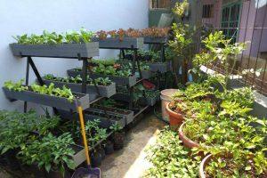Inspirasi 80 Tahun Sinar Mas: Bertanam Organik Mulai dari Pekarangan