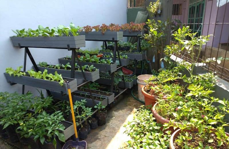 Bertanam Organik Mulai dari Pekarangan