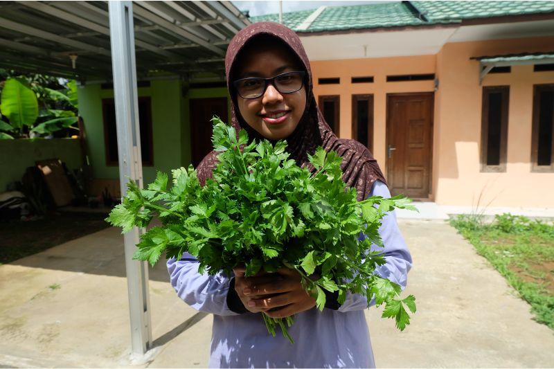 panen-sayuran