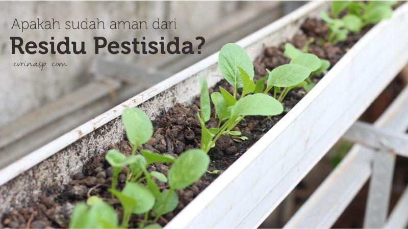 Apakah Sayuran yang Dikonsumsi Sudah Aman Dari Residu Pestisida?