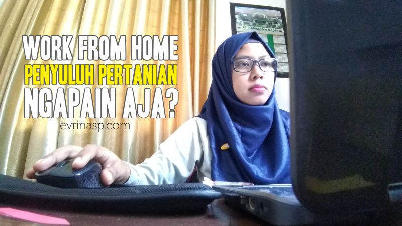 work-from-home-penyuluh-pertanian