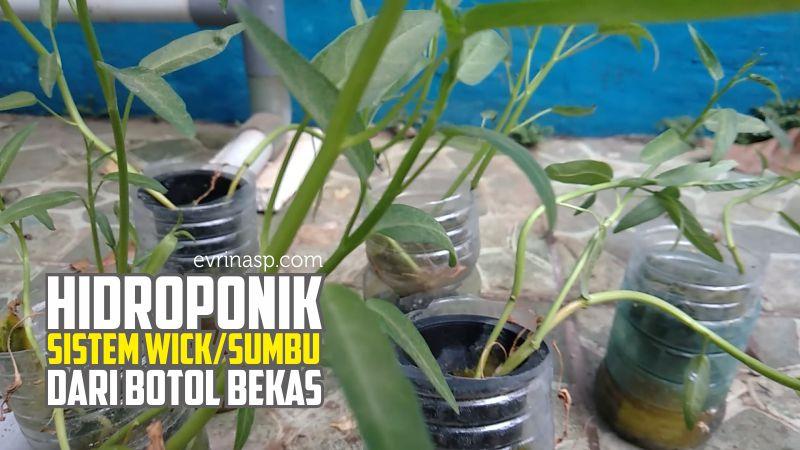 hidroponik-sistem-wick-sumbu